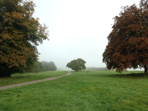 Autumn Walk - Writer's Blog - Genre Changing
